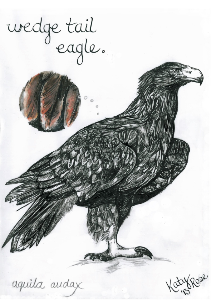 wedge tail eagle - katy rose